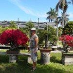 Jardin bonsai